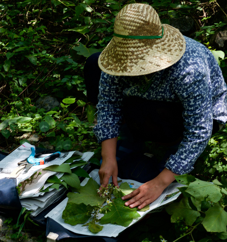 DSCF5481_collecting herbarium specimens_cropped